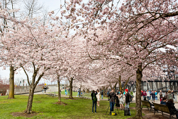 CherryBlossoms17_0019