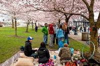 CherryBlossoms17_0010
