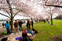 CherryBlossoms17_0021
